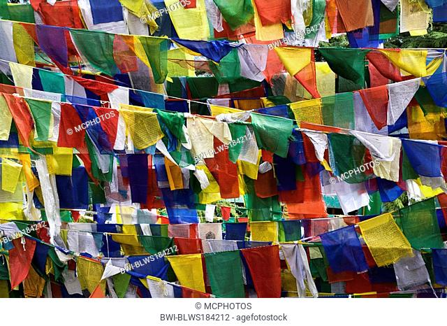 TIBETAN PRAYER FLAGS fly on the grounds of the TSUGLAGKHANG COMPLEX which is the DALAI LAMA'S residence in exile in MCLEOD GANJ, India, DHARMSALA