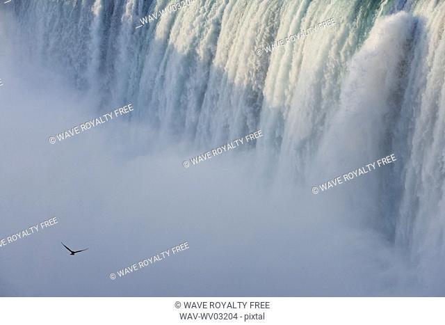 Close-up of Horseshoe Falls with Gull flying - Niagara Falls - Ontario Canada
