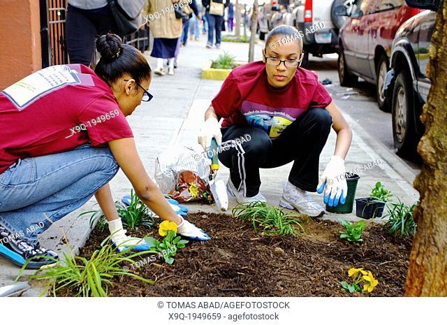 Hispanic community service volunteers of the Harlem Spanish Manhattan Seventh Day Adventist Church plant flowers in an East Harlem neighborhood public sidewalk...