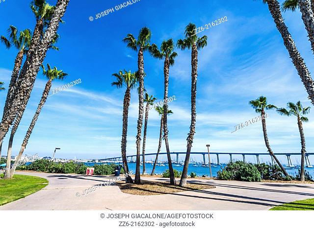 Palm trees at Coronado Tidelands Park. Coronado, California, United States