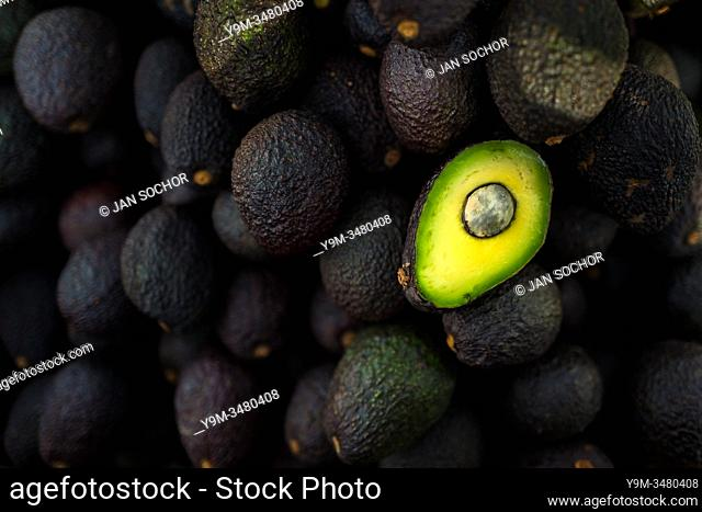 Ripe, black-purplish Hass avocados are seen offered for sale in the street of Medellín, Antioquia department, Colombia, 28 November 2019