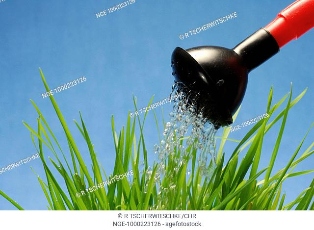 Watering Gras with Watering Can