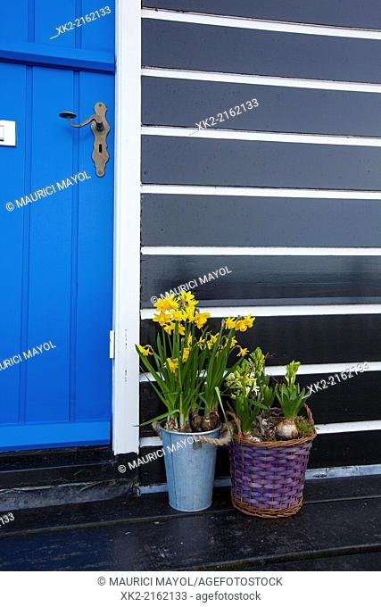 Detail of a door with narcissus flower plants in Marken, Nederland