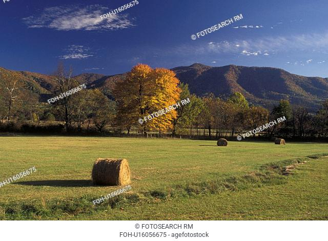 TN, Tennessee, Great Smoky Mountains National Park, Cades Cove, fall, hay bales