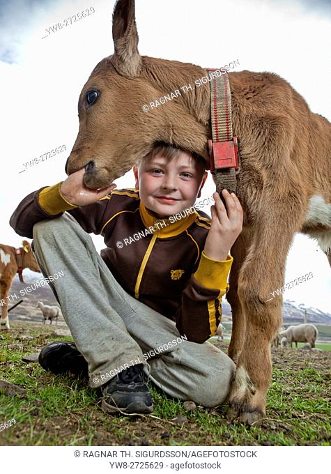 Boy with a young calf on his farm, Iceland