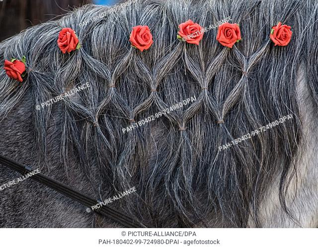 """02 April 2018, Germany, Traunstein: A decorated horse during the traditional Georgiritt ('Saint George's equestrian procession') to the """"""""Ettendorfer Kircherl""""""""..."""