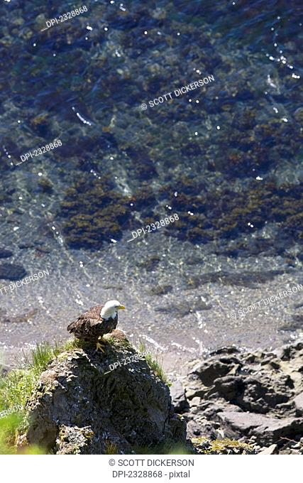 A Bald Eagle Perched On The Water's Edge On A Rock Pinnacle; False Pass, Southwest Alaska, United States Of America