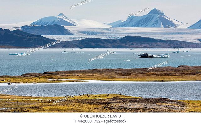 Spitsbergen, Svalbard, Kongsfjord, Ny Alesund, tundra