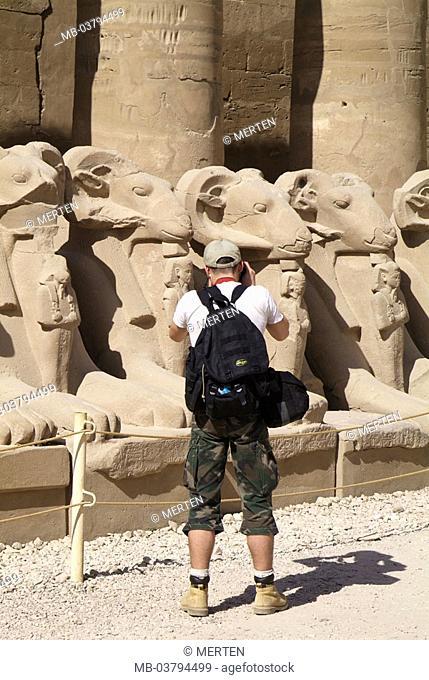 Egypt, Luxor, Karnak, Amun-Tempel,  Widdersphingen, tourist, photograph,  view from behind Africa, head Egypt, sight, destination, temple installation