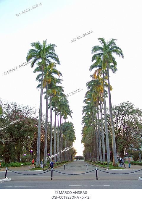 belo horizonte mg square garden park with palm trees on both sides