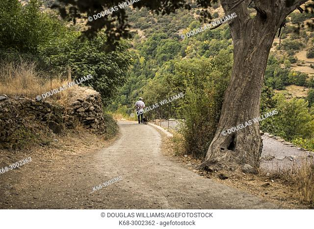 A man and a dog walk on a trail in the Alpujarras, Andalusia, Spain