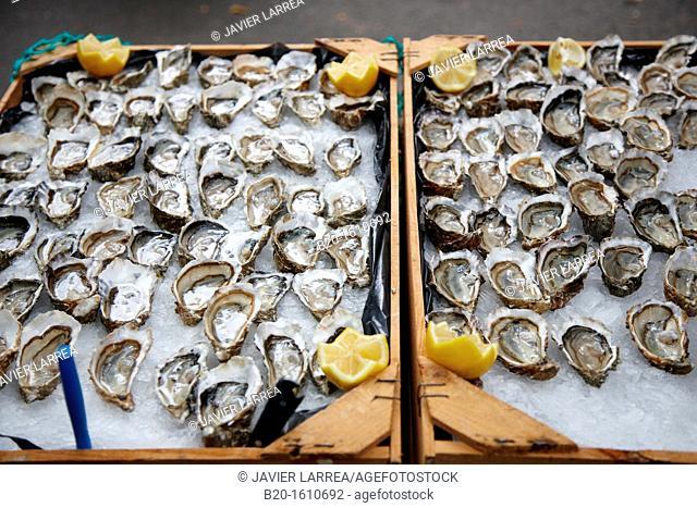 Oysters, Food Congress, Catering Service, Donostia, San Sebastian, Gipuzkoa, Basque Country, Spain
