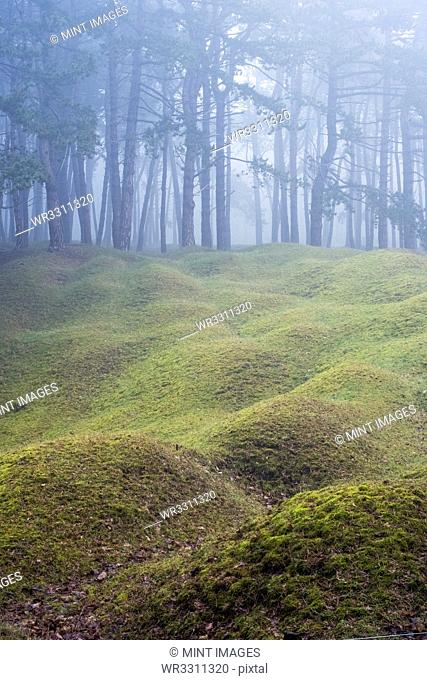 Misty woodland with grass mounds and trees in the background