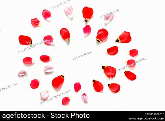 Round flowers background for blog, made of tulip flower petals. Flat lay. Isolated on white