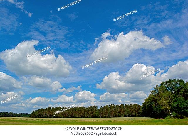 Sky and clouds above a forest at Wilsche, Gifhorn, Lower Saxony, Germany