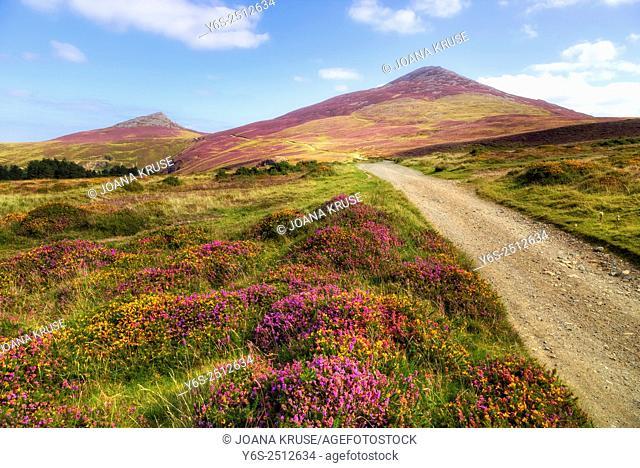 Yr Eifl, Llanaelhaearn, Llyn Peninsula, Snowdonia, Wales, United Kingdom