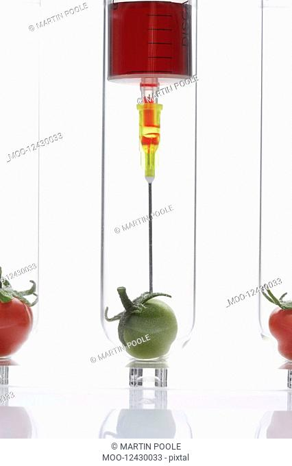 Syringe injecting green tomato in test tube