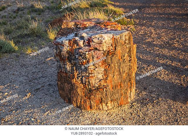 . Crystal forest, Petrified Forest National Park, Arizona, USA