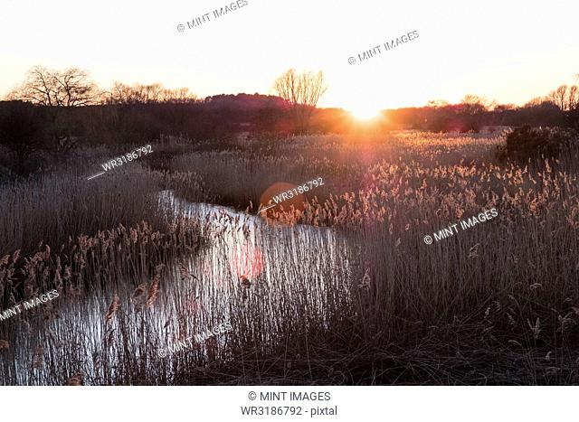 Landscape with small meandering river at sunset, sunlight filtering through reeds growing on riverbank, trees in the distance