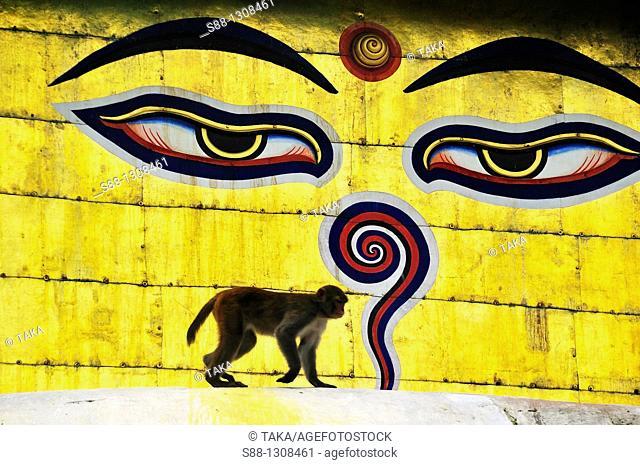 Monkey before painted Buddha eyes on the Stupa of Swayambhunath temple, Kathmandu Valley, Nepal