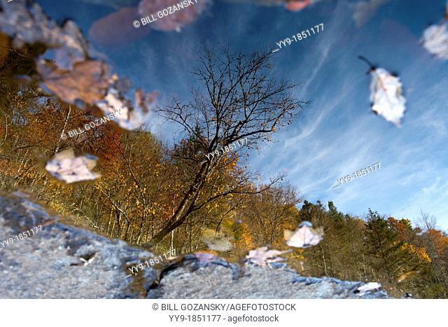 Tree Reflections - DuPont State Forest - near Brevard, North Carolina USA