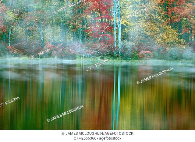 Landscape, trees, tree, forest, autumn
