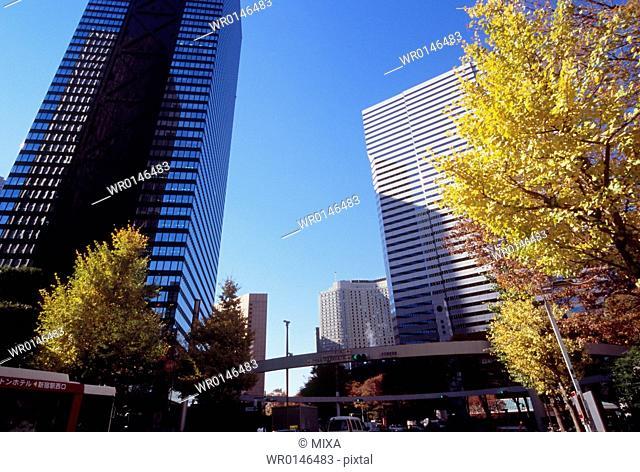 Autumn Leaves and Buildings, Shinjuku, Tokyo, Japan