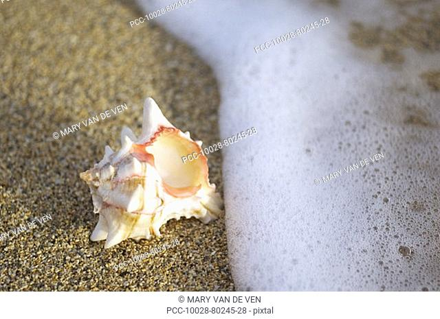 White seashell laying on sand with seafoam