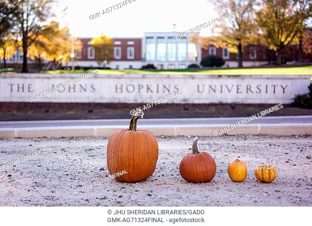 Four pumpkins are lined up on North Charles Street, with the sign for Johns Hopkins University, 2015. the Milton S. Eisenhower Library