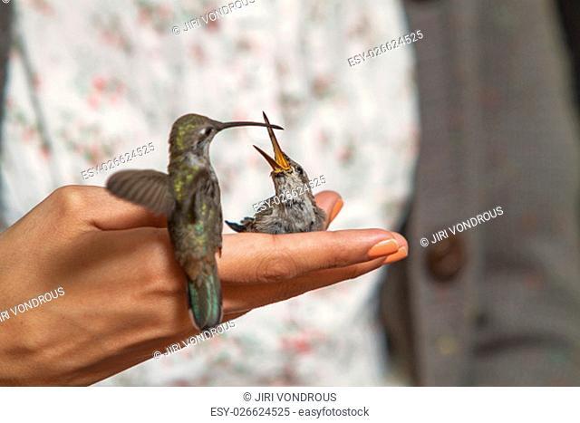 Hummingbirds feeding on the hand of girl