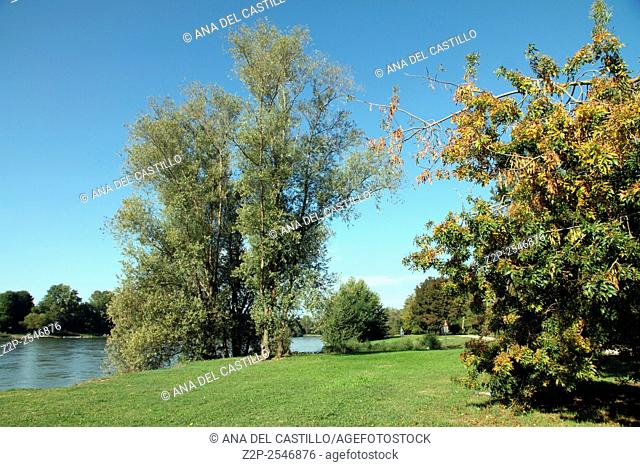 Park banks of Ticino river Pavia Lombardy Italy
