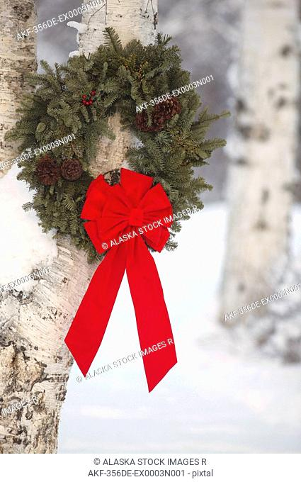 Holiday Wreath w/red ribbon hanging on birch tree Mat-Su Valley Southcentral Alaska Winter