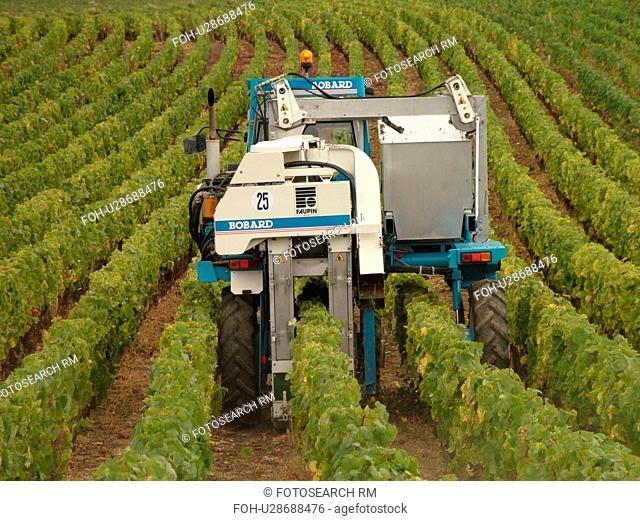 France, Chaux, Burgundy, Cote de Nuits, Cote d'Or, Europe, Burgundy Wine Region, wine harvest, vineyards