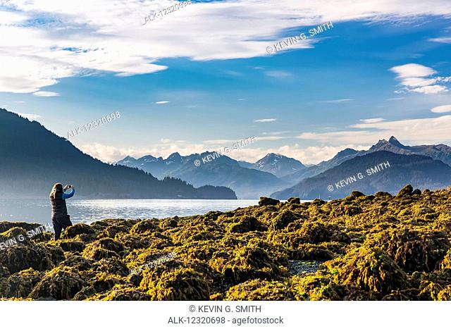 Woman standing on a rocky and kelp covered beach photographing the Kenai Mountains with her smart phone, Hesketh Island, Southcentral Alaska, USA