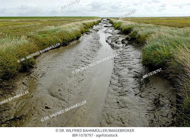 Drainage channel in the salt marshes, Schleswig-Holstein Wadden Sea National Park, Westerhever, Schleswig-Holstein, Germany, Europe