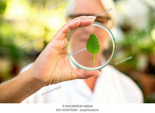 Female scientist examining leaf