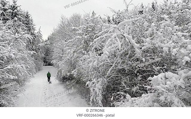 Rear view of person with sleigh walking amidst snow covered trees, Stuttgart, Germany