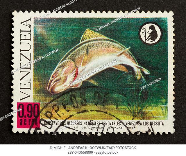 VENEZUELA - 1968: Stamp printed in the Venezuela shows a large fish, 1968