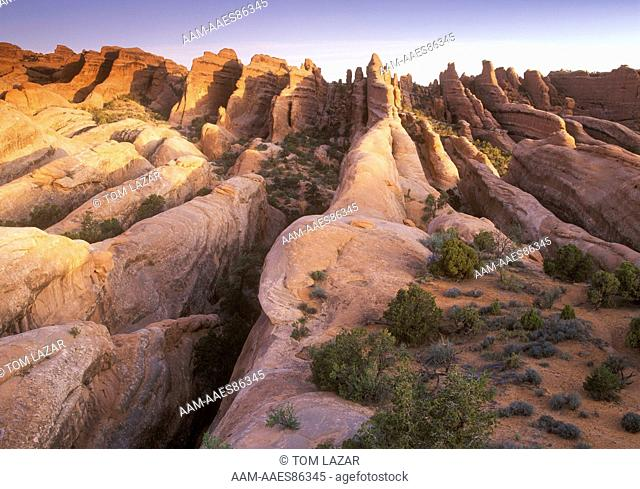 Devil's Garden, Arches NP, UT, vertical Row of Rock Fins, early morning