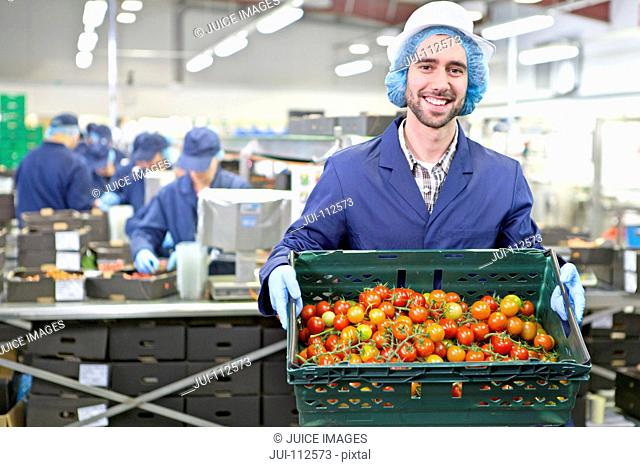 Portrait confident worker holding crate of ripe red vine tomatoes in food processing plant