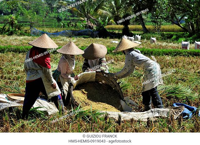Indonesia, Bali, Ubud, work in the ricefields