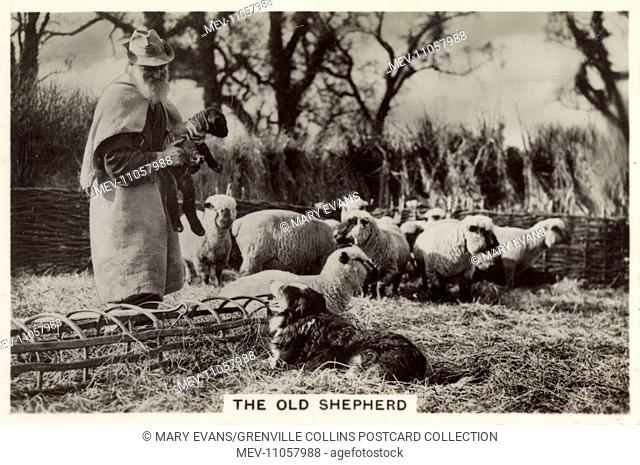 British Countryside - A 75 year-old Shepherd at Crondall, Hampshire