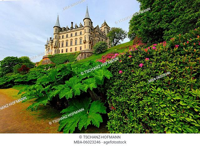 Scotland, Highlands, Dunrobin Castle, in the foreground leaves of Gunnera manicata in park