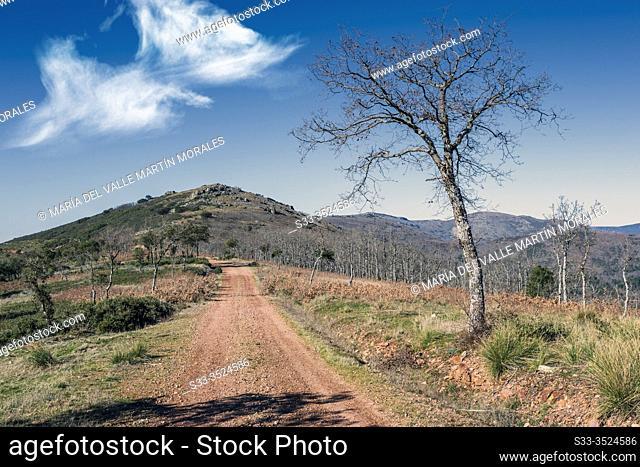 Oaks at Retuerta pathway and Morrilla hill in Toledo's Hills. Spain. Europe