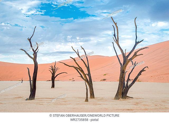 Namibia, Hardap, Sossusvlei, Bare Trees of Dead Vlei
