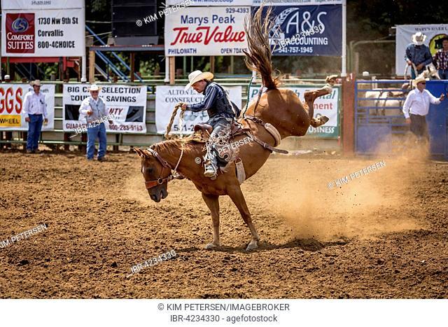 Saddle bronc riding, competition, Philomath Rodeo, Philomath, Oregon, USA