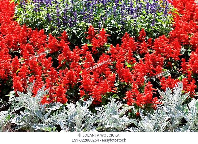 colorful blooming flowers in garden in summer