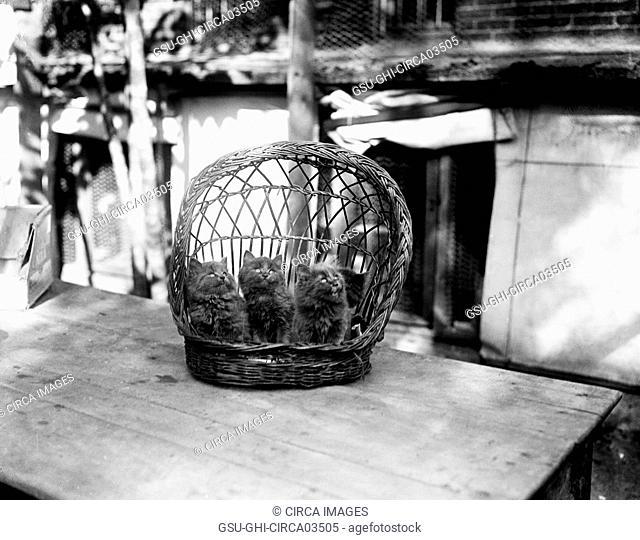 Three Kittens in Basket, Harris & Ewing, 1920