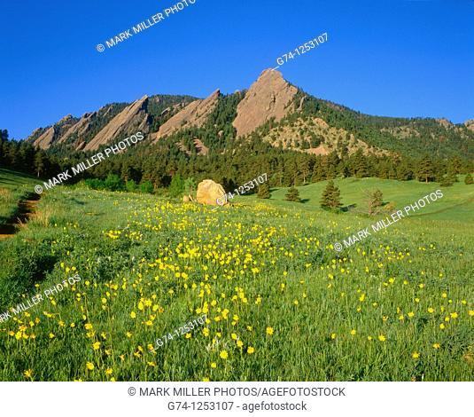 Spring at the Flatirons, Chautauqua Park, Boulder, Colorado, USA