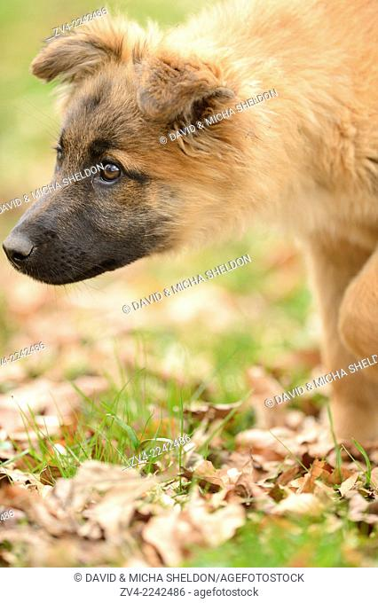 Close-up of a mixed breed dog puppy in a garden in spring